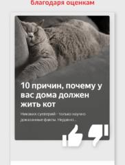 Яндекс.Дзен 02